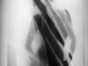 Galerie: Silk / Photogramme 2011