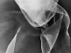 Galerie: Silk / Seide
